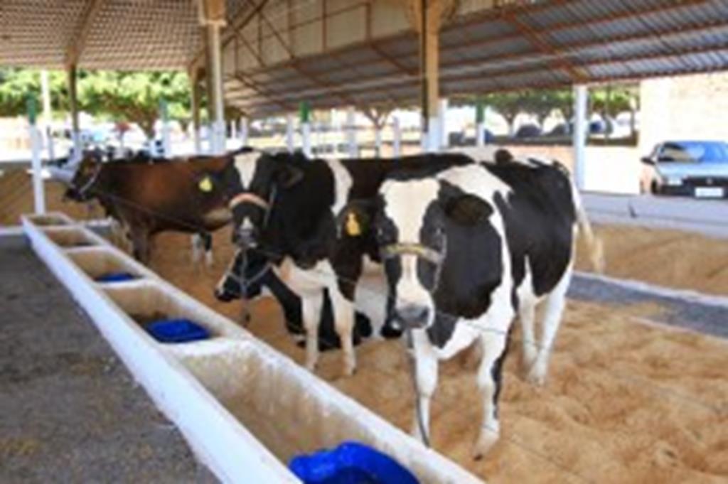 Torneio retrata potencial leiteiro de Campo Verde