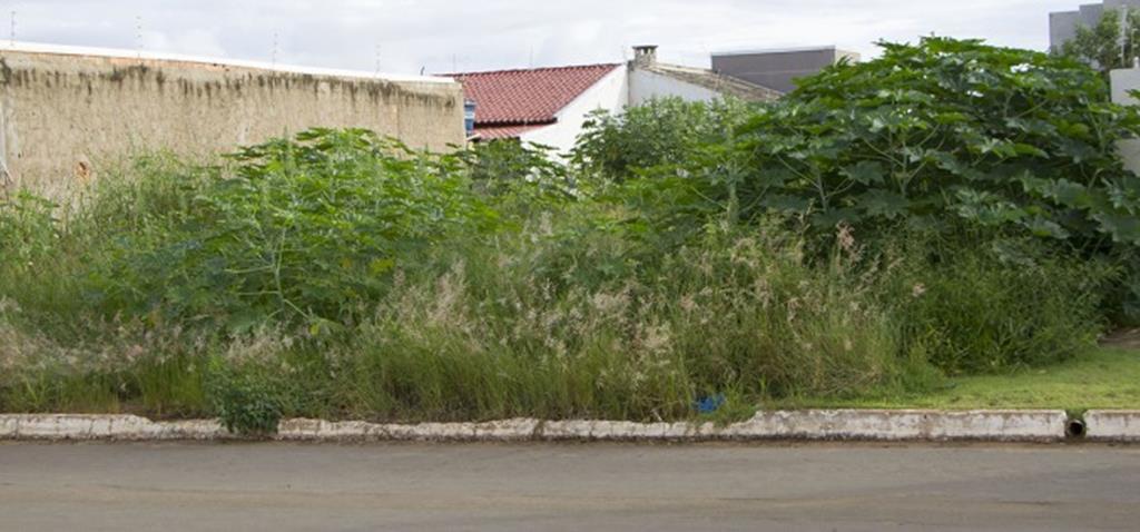 """Prefeitura de Campo Verde lança campanha """"Lote Limpo"""""""