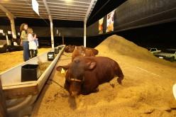 Pecuaristas destacam crescimento da pecuária na 16ª Expoverde