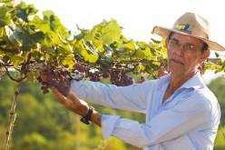 Produtor aposta no cultivo de uva