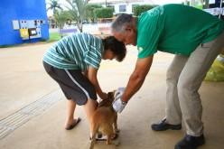 Imunização contra raiva em Campo Verde já atingiu 75,94% da meta