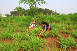 Projeto pedagógico contribui com a preservação do meio ambiente