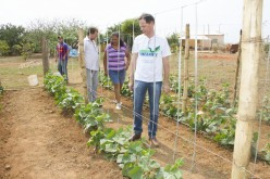 Produtores do Dom Ozório investem no cultivo de pepino para conserva