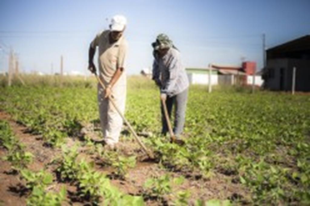 Agricultor aposentado dá exemplo de como manter terrenos limpos e ainda economiza