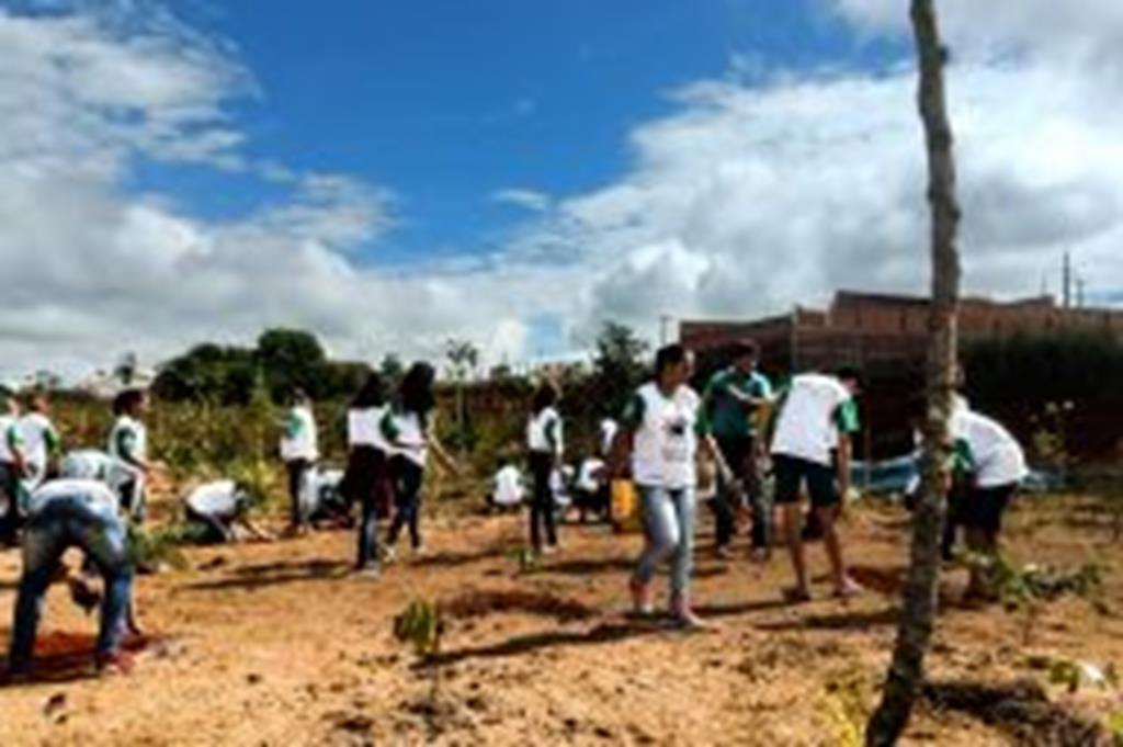 Alunos fazem plantio de árvores no Parque das Araras