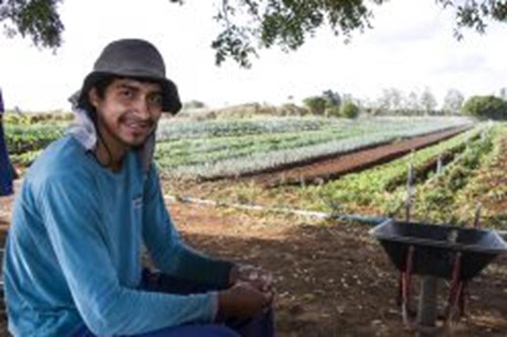 Cultivo de hortaliças muda vida de migrante maranhense
