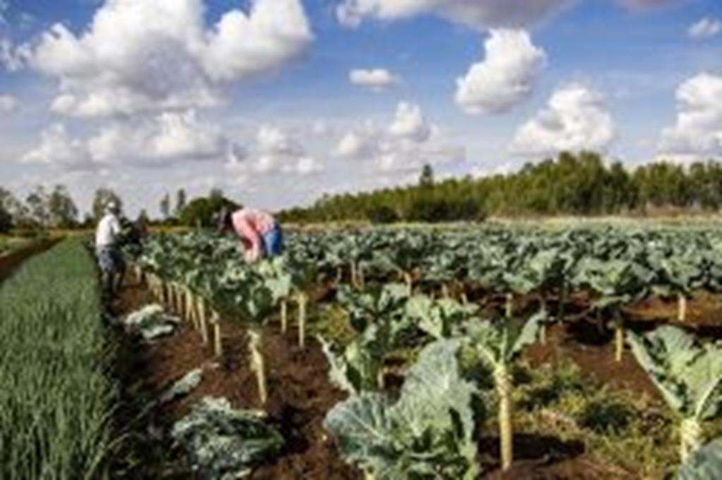 IFMT lança edital para compra de alimentos da agricultura familiar