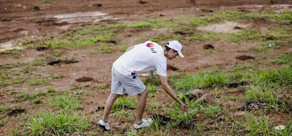 SEDAM e Voluntários BRF fazem plantio de árvore no Recanto dos Pássaros