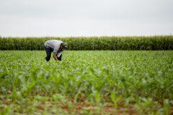 Campo Verde lidera geração de empregos no mês de fevereiro
