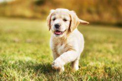 Vigilância Ambiental intensifica atuação no controle da Leishmaniose Visceral Canina