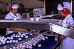 Município concede incentivos a empresas que vão gerar mais de 370 empregos