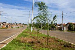 Palmeiras imperiais e ipês são plantados na Avenida Beija-flor
