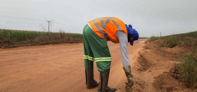 Secretaria de Agricultura de Campo Verde começa a erradicar plantas guaxas em margens de rodovias