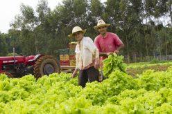 Projeto Verdinho vai fomentar agricultura familiar em Campo Verde
